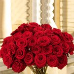 50-long-stem-red-roses