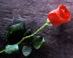 ws_True_Love_1280x1024